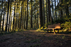 Sunset at the Wallace Falls State Park Royalty Free Stock Photography