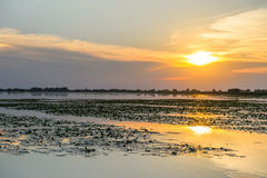 Sunset on water, Danube Delta Romania Royalty Free Stock Images