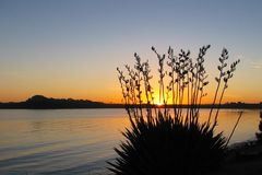 Sunset water flax. Sunset over water flax shillouette Stock Photo