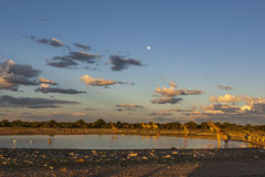 Sunset at a waterhole in Namibia Royalty Free Stock Photo