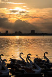 Sunset on west lake Stock Photography