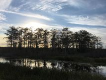 Sunset in a wetland area Royalty Free Stock Image