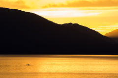 Sunset Whale. A whale breaching in the yellow glow of the setting sun Stock Photography