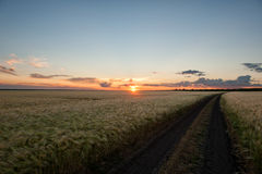 Sunset in wheat field. Summer landscape Stock Photo