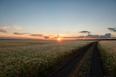 Sunset in wheat field. Summer landscape Stock Photo