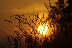 Sunset in a wheat or straw field Stock Photos