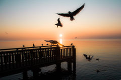 Sunset whit Seagulls Stock Image