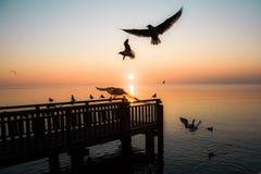 Sunset whit Seagulls Stock Image