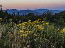 Sunset of the white mountains in New Hampshire. Love this beautiful and wild flowers in white mountains in New Hampshire. Amazingly beautiful stock photos