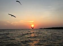 sunset wiatr pozyskiwania burzy Fotografia Royalty Free