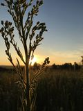 Grass sun royalty free stock photos