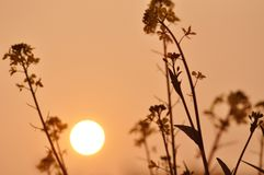 The sunset and wild flowers Royalty Free Stock Image