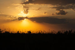 Sunset in the wild nature Stock Photos