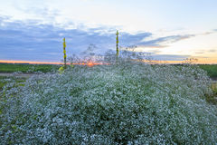 Sunset at the wild west. Medicinal plants, wildlife Stock Images