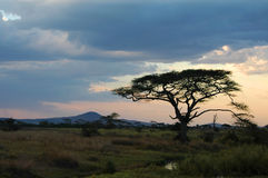 Sunset in the wilderness. Of the Serengeti park in Tanzania Royalty Free Stock Photos