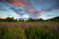 Sunset and wildflowers. Sunset behind a field of purple wildflowers royalty free stock photography