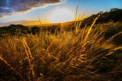 Beautiful golden grasses seen as the sun sets over Combe Valley Countryside Park in East Sussex, England. Sunset in the wildlife reserve at Combe Valley, near stock photo