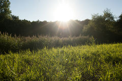 Sunset in wildnes. Beautiful landscape and sunset grass Royalty Free Stock Photography