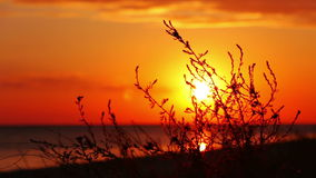 Sunset, Wind and the Grass stock video footage