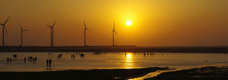 Sunset in Gaomei wetlands. Sunset in wind power wetlands. In Taiwan Taichung Gaomei wetlands royalty free stock images