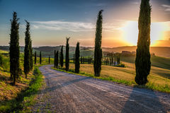 Sunset and winding road with cypresses in Tuscany Royalty Free Stock Image