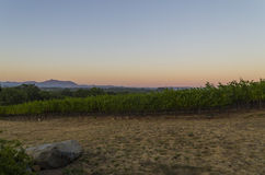 Sunset at a winery. Beautiful sky  as the sun sets over a Sonoma County CA winery Royalty Free Stock Images