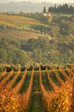 sunset wineyard krajobrazu Fotografia Royalty Free
