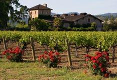 sunset winnica napa valley zdjęcie royalty free