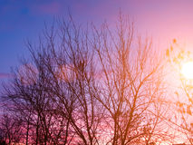 Sunset  winter  cold Royalty Free Stock Photo