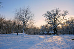 Sunset in winter Royalty Free Stock Image