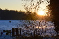 Sunset winter estate field Royalty Free Stock Photo