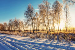 Sunset in winter field Stock Image