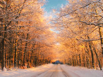 Sunset in winter - forest Stock Photos