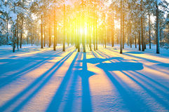 Sunset in winter forest Stock Photo