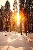 Sunset in Winter Forest. Taken in Austria Royalty Free Stock Photography