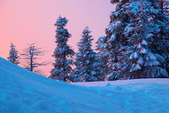Sunset in the winter forest. Royalty Free Stock Photography
