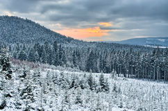 Sunset during winter in the forest Stock Photos
