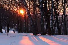 Sunset in winter forest. Russia Stock Photos