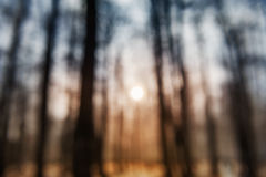 Sunset in winter forest Royalty Free Stock Photo