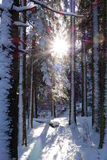 Sunset in a winter forest. Royalty Free Stock Images