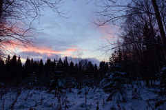 Sunset in the winter forest. The beginning of winter. Getting dark early. Everywhere snow already Stock Photography