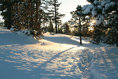 Sunset in the winter on the forest. Of Bryce canyon Stock Photo
