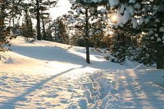 Sunset in the winter on the forest Royalty Free Stock Photos