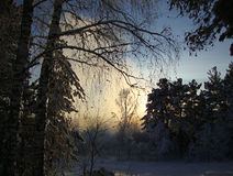 Sunset in winter forest. Fabulous sunset in the winter forest Stock Images