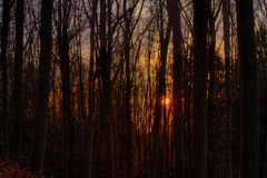 Sunset Winter Forest Royalty Free Stock Image