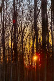 Sunset Winter Forest Royalty Free Stock Photography