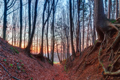 Sunset Winter Forest Stock Image