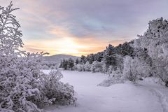 Sunset in the winter forest stock images