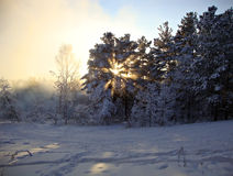 Sunset in winter forest Royalty Free Stock Photography