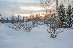 Sunset in the winter forest magic. Landscape Royalty Free Stock Image
